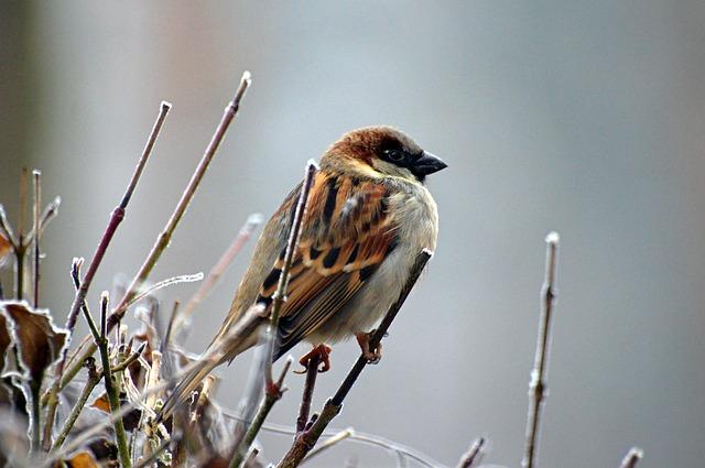 Dlaczego o tej porze roku warto zacząć dokarmianie ptaków?